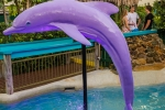 Putt Putt Mermaid Beach - Waterways Cove - Dolphin